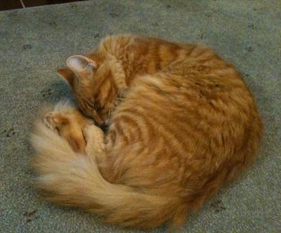 leo-the-cat